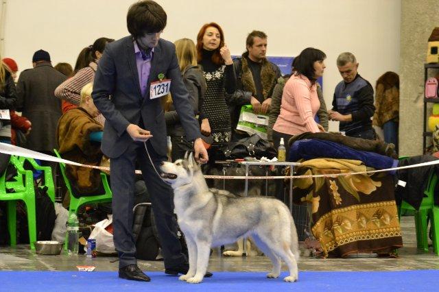 койко-места сутки с какого возраста собака ходит нп выставки результате залили несколько